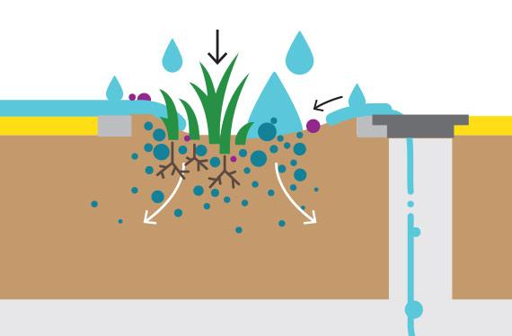Green Infrastructure absorbs stormwater