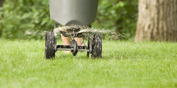 Go easy with chemicals & fertilizers