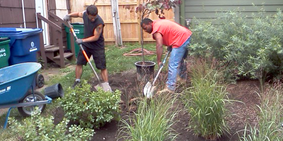 Plant a tree or other native plants
